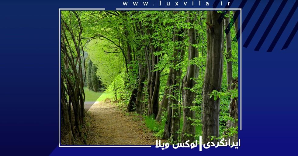 پارک جنگلی سیسنگان از جاذبه های گردشگری نوشهر
