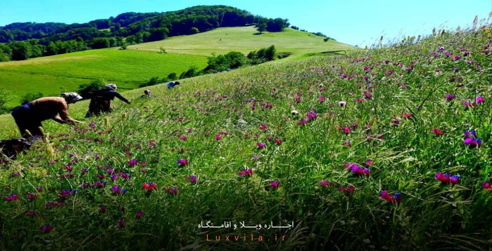 روستای مشند