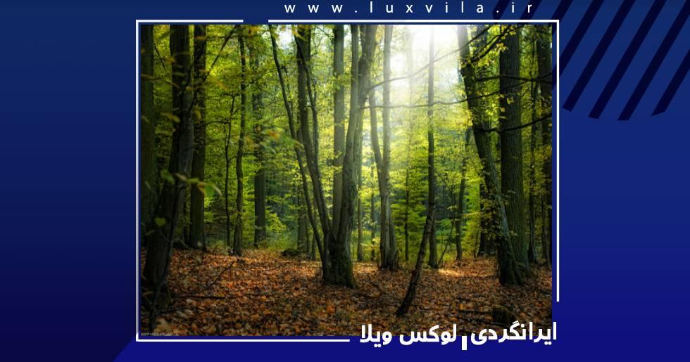 پارک جنگلی سیسنگان نوشهر