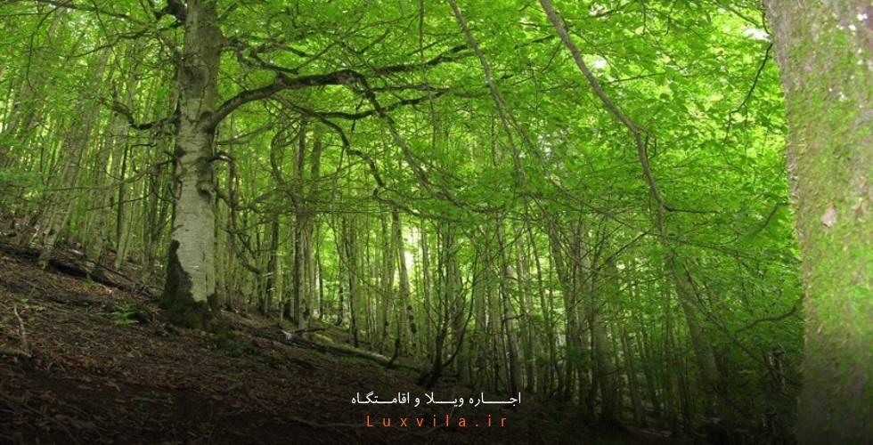 جنگل دوهزار تنکابن