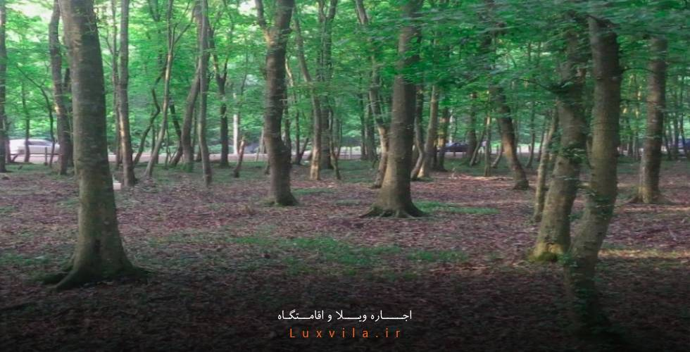 جنگل روستای اهلم