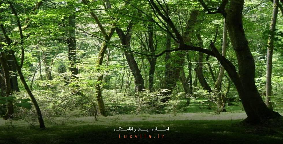 پارک جنگلی نور در رویان
