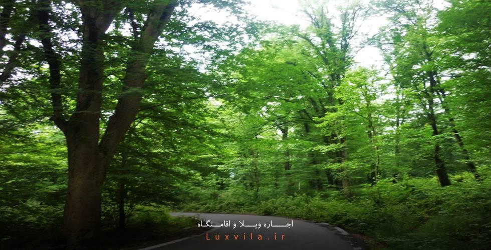 پارک میرزا کوچک خان جنگلی آمل