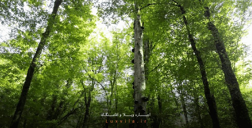 جنگل نارنجلو