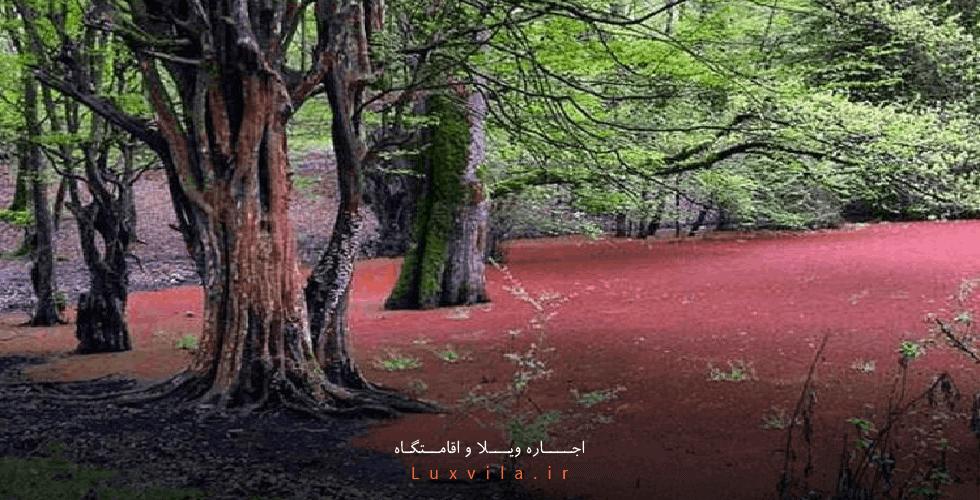 مرداب هسل نوشهر