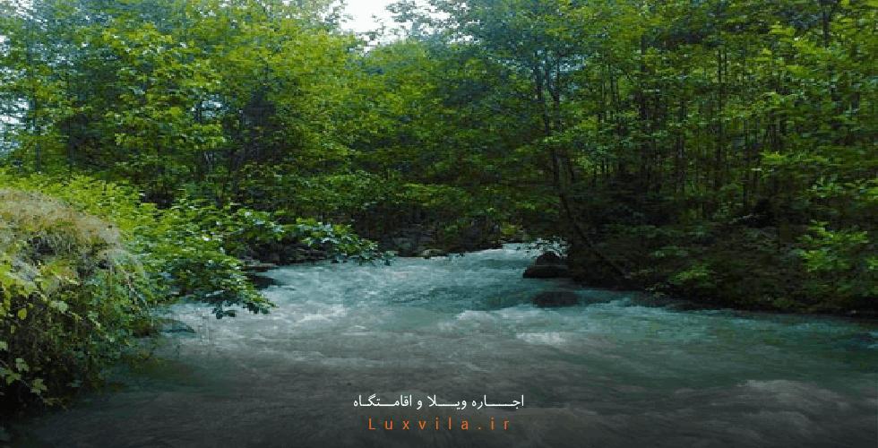 جنگل دو هزار و سه هزار تنکابن