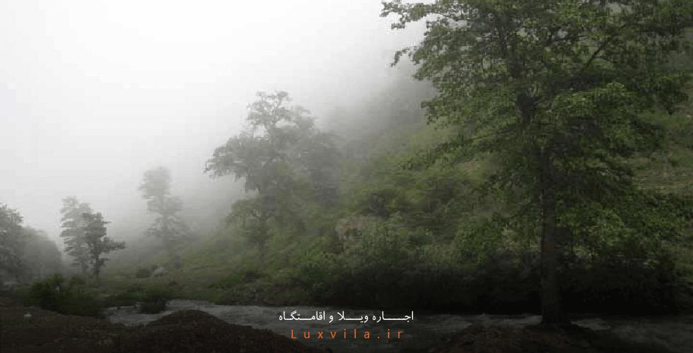 جنگل مجل